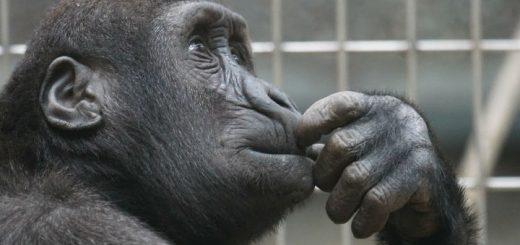 Come chiedere assistenza senza fare la figura della scimmia