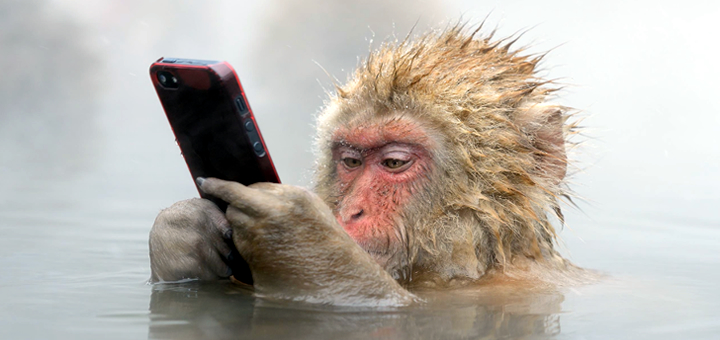 Dal manager alla casalinga: siamo tutti scimmie!